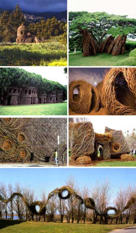 Architectural Spaces from Living Trees | WebEcoist