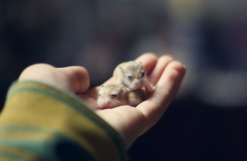 OMG, little tiny creatures are too cute! when they are fuzzy