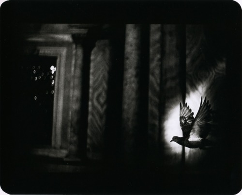 via luceplace, liquidnight, Giacomo Brunelli - Untitled - from The Animals