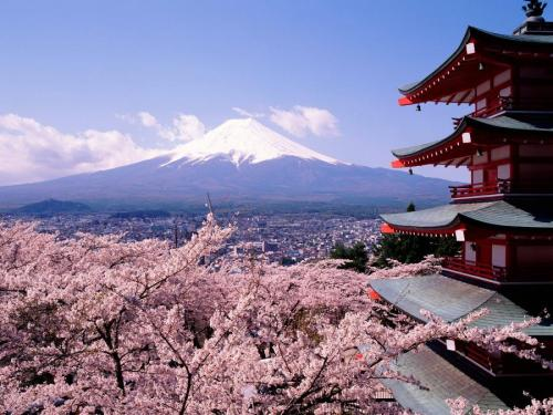 studiomu:  vmconverter:  travelhighlights:  Cherry Blossoms & Mount Fuji Japan