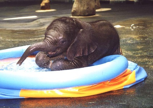 aww baby elephant in his little pool.. too cute