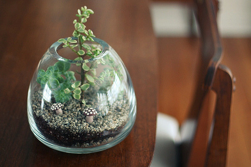 ellaminnowpeas:  aresohappy:  a desert terrarium (via the mayfly)