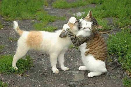 Tagged: adorablecutecatdoghugging animalsinterspecies love