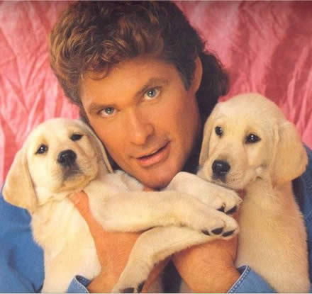 do not hassel the hoff