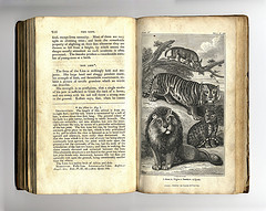 Cats 1820  From - Animal biography : or, authentic anecdotes of the lives, manners, amd economy, of the animal creation, arranged according to the system of Linneaus / By the Rev. William Bingley.  via crackdog on flickr
