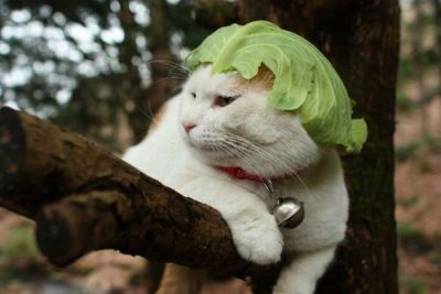 This cat is wearing a leaf of lettuce on its head.  You sooooooo need to step up your game. thanks to adamsaysplease for this find.