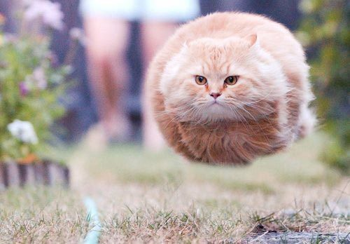 This picture was taken just before Hoverball Cat took off at supersonic speed. It sounded like a whistle and a scream and the ground caught fire.     (photo via Uproxx)