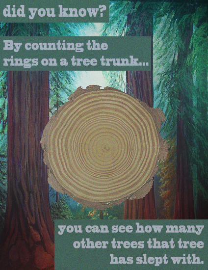 What Tree Rings Mean