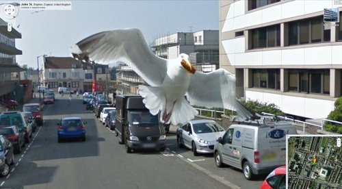 dogfromspace:  9gag:The best Google streetview capture ever