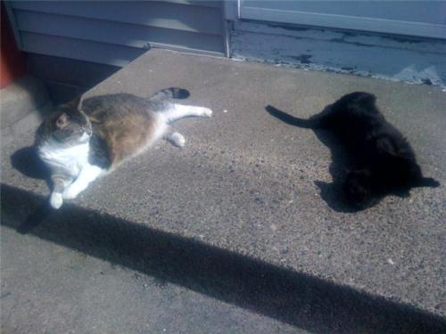 My cats Tubby  (on the left) and Carmen lovin' the warm weather.