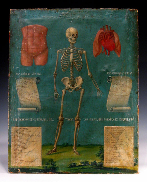 andrewromano:  Medical school anatomy chart from Mexico (1857). Available here.   Daily Romano