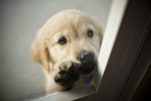 ReCreando Cute Dog