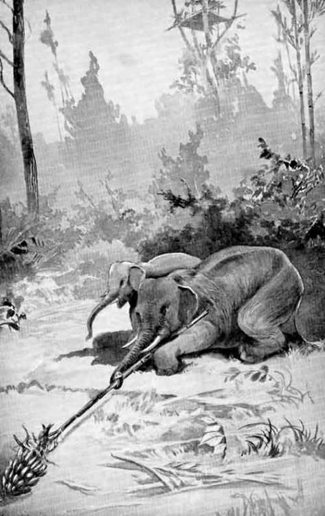 Then that cunning elephant sat down on the ground and pushed the bamboo along the ground straight before him toward the bananas. When the hairy end of the bamboo reached the stalk of the bananas, he began to twist the other end of the bamboo with the tips of his trunk; for an elephant can use the tips of his trunk in the same way that you use your fingers. - Prince Sarath Ghosh, The Wonders of the Jungle (1915) [full text]