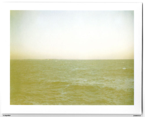 Day 77.  Kinda yellow. The Lizard, Cornwall, UK. Polaroid Land Camera 240 and 125i film (expired 12/2007). (Polaroid photograph, all rights reserved, copyright: Jo Bradford 2010)