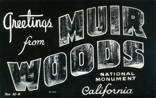 Vintage postcard — part of my California state ephemera tour on my blog HERE.
