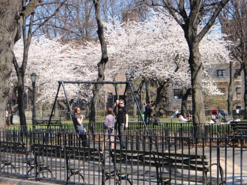 Sakura Park New York City.