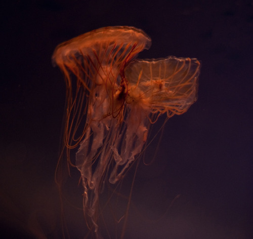 Abby asked me: what happens when jellyfish get tangled up? We watched and saw some that easily pulled apart, slickly separating themselves from one another with ordinary pulsing propulsion. Others looked, shall we say, knotted: their poisonous streaming strands tied into a bind, one's locomotive contractions pitifully thwarted by the other as they floated with the current. I'm sure there are other helpful metaphors to be found among the photos of our visits to the aquarium and the insectarium.