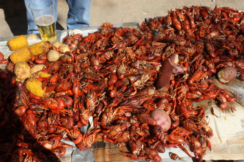 As soon as the humidity sets in, the biggest, plumpest crawfish are ready for the boil, along with corn and potatoes eaten straight from the greasy newspaper. The red, spicy grime gets stuck in your fingernails for days afterwards but all the sacrifice just goes towards the party gods. Hans' Bierhaus.