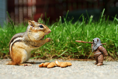 There aren't enough nuts for the both of us