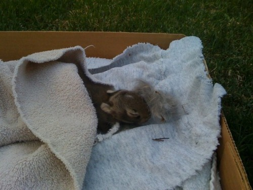 Spencer Tweedy found a bunny in his backyard. baby bunny in the backyard. I'm really worried about the baby bunny in our backyard. :( hopefully its mom will come back soon.
