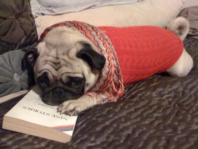 hipsterpuppies:  martin's goodreads.com account is 80% books he picked up at flea markets and has no intention of actually reading [photo via alison r]