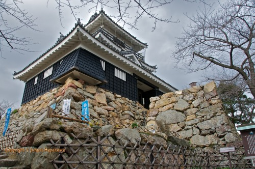 "Hamamatsu castle. Hamamatsu castle was originally built in 1532 by Imagawa Sadatsuke of the Imagawa clan.  Tokugawa Ieyasu obtained the castle after defeating the Imagawa in a battle in 1568 and moved here permanently in 1570. Many of his famous battles were fought using this castle as his base of operations. The most famous battle Ieyasu fought from Hamamatsu castle is recognised as one of the most fierce in Japanese history, and one that nearly settled the fate of the whole country by wiping Tokugawa Ieyasu out altogether - the battle of Mikata ga hara.  Tokugawa Ieyasu had extended the influence of his ally Oda Nobunaga by making Hamamatsu his headquarters. Situated halfway between Kyoto and Odawara (Edo was not yet established) on the Tokaido road Hamamatsu was in a very strategic position to control the major artery of pre-modern Japan.  Takeda Shingen realised that his biggest threat was Oda Nobunaga. Nobunaga had destroyed the base of the Buddhist warrior monks of mount Hiei in 1571, and Takeda Shingen being a Buddhist monk took this to be an affront on Buddhism as well as a threat to his desire to become warlord of Kyoto.  Tokugawa Ieyasu was not Shingen's biggest threat, but an immediate challenge to his plans to destroy Oda Nobunaga. Shingen had made a peace treaty with Nobunaga, and secretly planned to first destroy Ieyasu and then move against Nobunaga. Nobunaga advised Ieyasu to withdraw to Okezaki castle while the peace treaty was being drawn up, but the headstrong Ieyasu wouldn't have it knowing Shingen all too well.  Ieyasu remained in Hamamatsu and Shingen took this as a further affront, deciding to make a direct attack on Hamamatsu castle. Shingen cut off all of Ieyasu's supplies and support from Oda, and then moved on Ieyasu.  Ieyasu was advised that he was not the objective and that Shingen merely wanted to get at Oda. He was advised to prepare for a siege and send out night raids to break it and take Shingen from the rear. Ieyasu would have non of it, and decided against a direct battle on the plains in front of Hamamatsu castle.  The Takeda army had taken the high ground of Mikata ga hara and his army outnumbered Ieyasu three to one. The battle lasted all day and into the night when it was realised by Ieyasu that he was not going to see victory. The keeper of Hamamatsu castle, Natsume Yoshinobu rode out from Hamamatsu castle and pleaded with Ieyasu to flea and think of his family's line. Ieyasu would not budge determined to die fighting, but Yoshinobu swung Ieyasu's horse around and struck it on the rump sending him back to the castle, he then charged into the Takeda army shouting ""I am Ieyasu.""  As Ieyasu entered the gates of Hamamatsu castle the orders were given to shut them, but Ieyasu interrupted them. To shut the gates was exactly what Shingen wanted them to do. Instead he ordered the gates left open and all the fires to be lit to guide retreating samurai back. Sakai Tadatsugu was ordered to beat the taiko drum at the gate.  The battle chronicle Mikawa Fudo-ki notes that Ieyasu had the dead Tokugawa samurai who had died in the retreat laid upon their backs in lines while the samurai who had died in advancing laid face downwards. The advancing Takeda suspected a trick and didn't dare enter the castle even though it's gate was open.  The Takeda camped on the plain in front of the castle. Ieyasu determined to make the night unpleasant for the Takeda sent out night patrols of samurai to sneak into the Takeda encampment and take their weapons and provisions. Led by Okubo Tadayo and Amano Yasukage, skilled men in night infiltration, sixteen samurai armed with guns and 100 footsoldiers moved on the Takeda encampment. They infiltrated the Takeda in small teams and sabotaged their equipment.  Okubo constructed a dummy bridge over a narrow pass constructed of cloth and strewn with straw and then proceeded to harass the enemy from across the pass firing burning arrows into them. The ruse worked and a contingent of Takeda attempted to cross and fell into the steep ravine where they were fired upon by the Tokugawa.  Shingen held a war council and impressed by the tenacity of the Tokugawa, Shingen resolved to withdraw rather than risk a full scale siege of the castle and deal with the night infiltrators of the Tokugawa. So Tokugawa Ieyasu and Hamamatsu castle were saved by one very loyal retainer and Ieyasu's ability to use both psychological and gorilla warfare."