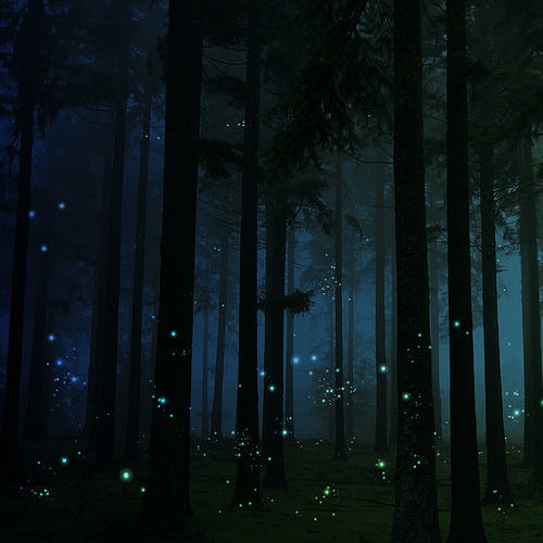"thatkief:  theantidote:  firefly forest (by A Delicate Mind) ""Long after the firefly had disappeared, the trail of its light remained inside me, its pale, faint glow hovering on and on in the thick darkness behind my eyelids like a lost soul."" Haruki Murakami - Norwegian Wood via  blazinuzumaki: / id0be1ieve:"