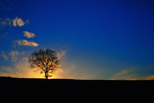 lori-rocks: ~lonely tree by nick-k