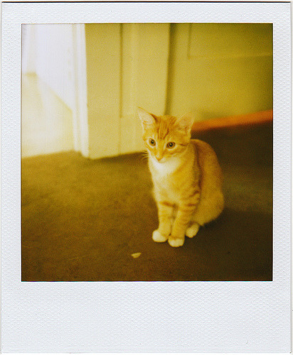 so tiny (via ohheygreat) Here, have a Polaroid kitten. It's Manny, my dad's cat, when he was a baby. He's a little crazy but then, so are you. I mean me. I mean all of us. I know it's not Wednesday (sorry Alison) but this week is being a bitch already so you know, we need extra coffee and cute stuff. Amirite?