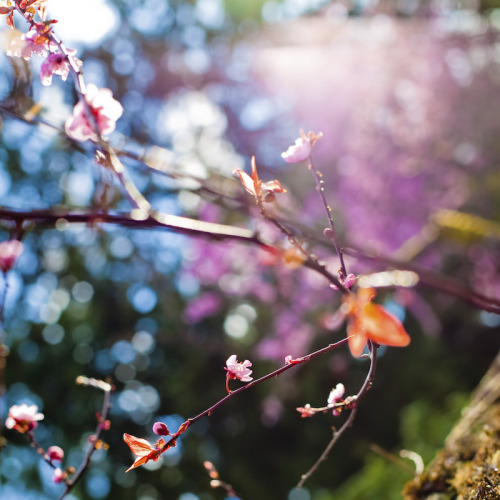 calliope-wine:  Spring Fever in 58 Amazing Photos