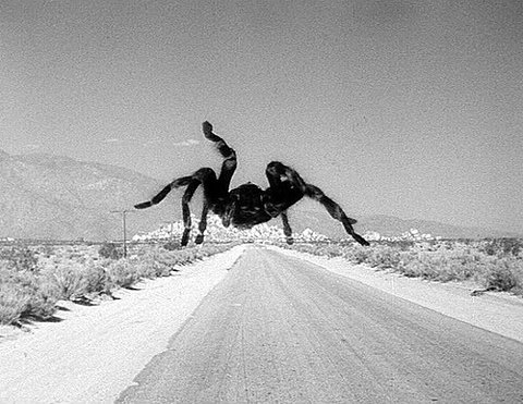 """Welcome to New Mexico, The Land of…Giant Fucking Spiders!!!"""