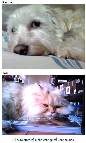 who says chatroulette is just for french cats!?? happy cat(dog)urday!