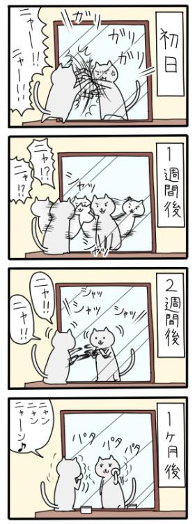 flatmountain:  tknori:  yellowblog:  butinekoinai:  yotta1000:  gkojaxmeetsrebloggersuptown:  mnknst:  meiii:  unknownlabel:  burnworks:  book-cat:  「鏡に慣れていく猫」/「atp」のイラスト [pixiv]