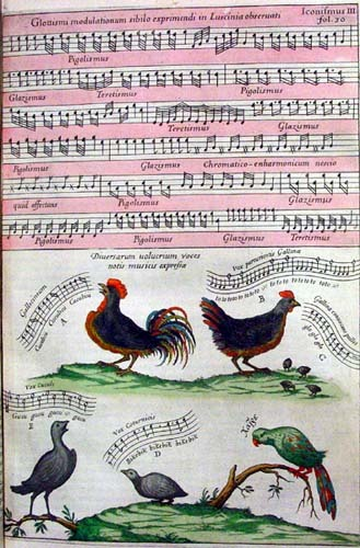 From Kircher's Musurgia Universalis: Birds!! (via xtina)