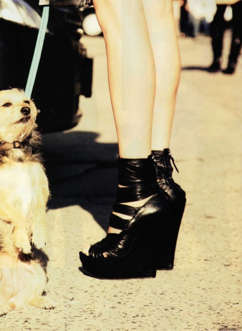 This will be my best friend. Not the dog, the lace up wedge! Yay! :) #GodBlessWedges shoelust