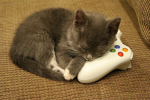 gamefreaksnz:  (via theinternetaccordingtoadrian) cute overload