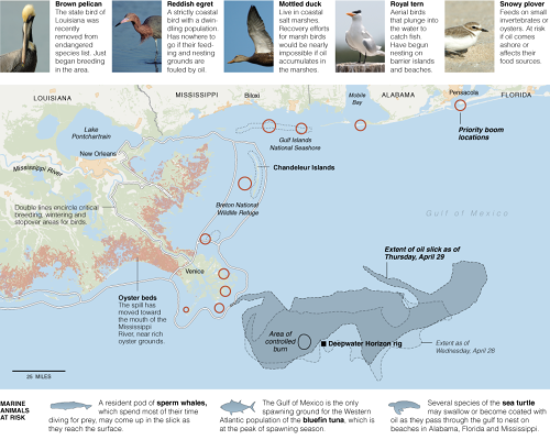 Gulf of Mexico #Oilspill Map from @nytimes