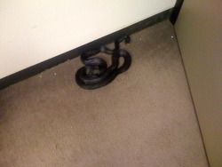 This black rat snake sat a yard away from me through Tuesday's news meeting at the Wash. Times. Only noticed it went I got up to leave. Must have crawled in through the vents. Got plenty of mice in the Newsroom for him to eat no doubt.