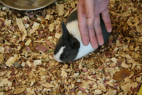Here's Josh petting one of the tiny, adorable, baby bunnies.
