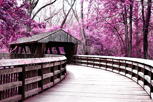 Covered Bridge (by ~ Janelle ~)