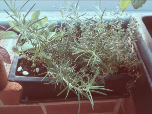 Sage, rosemary, thyme. The parsley is elsewhere!