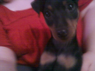 My new puppy! :)