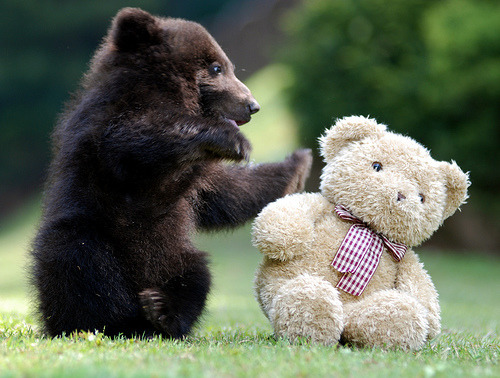 theanimalblog:  kari-shma:  Bear freinds (by floridapfe)   Bear friends. LOL