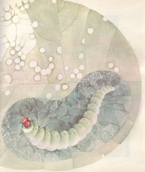 Illustrations from The Story of a Silkworm by Nooreddin Zarrinkelk (Iran, 1973).  Via A Journey Round My Skull