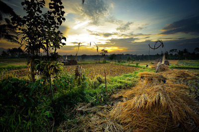 Around Ubud - Bali, Indonesia© Auré from Paris