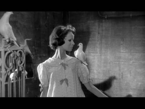 Édith Scob in Les Yeux sans visage [Eyes Without a Face], 1960 Directed by Georges Franju & discovered by liquidnight [via Vintage Photo]