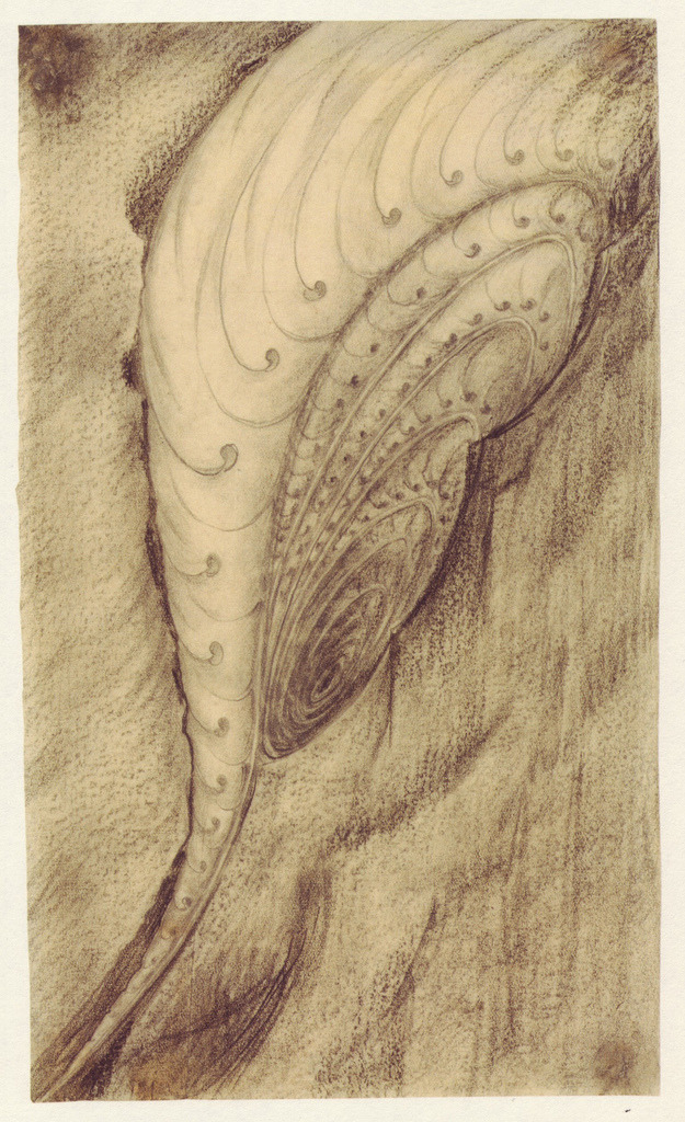 theowlhooteth: Hermann Obrist Fantasy shell charcoal and pencil, ca. 1895