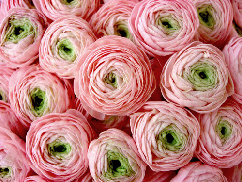 touchbeauty:  vintagerosegarden:  xenabitesback:   Pink roses at flower market in Nice, France….Painted ladies…   (via purplegem)