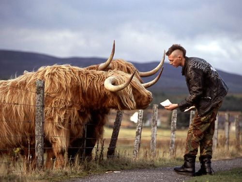 nationalgeographicdaily:  Dumb Blind Luck, ScotlandPhoto: Jim Richardson When suddenly, out of nowhere, this guy with Mohawk hair and a leather jacket walked into my viewfinder. I never saw him coming at all. Hardly had a chance to pop my head over the camera to see if what I was seeing in the viewfinder was, in fact, real when he pulled out a loaf of white bread and started feeding Rusty and Tufty, who seemed to be well acquainted with the drill. Recovering swiftly (I try to do that when good fortune rescues me from my general incompetence), I hit the motor drive and let it run.
