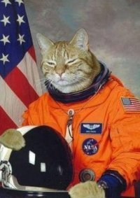Bro Cat is totes ready for Bromageddon.  He's gonna nuke that commie asteroid, make out with Liv Tyler and fist pump like a champ.  FUCK YEAH AEROSMITH! Don't wanna close my eyes, don't wanna fall asleep, cause I'd miss you bro…
